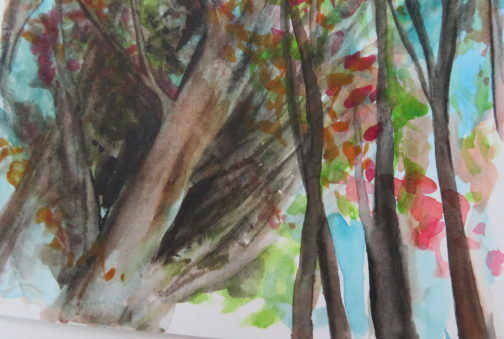 A watercolor of tall tree tops in the spring